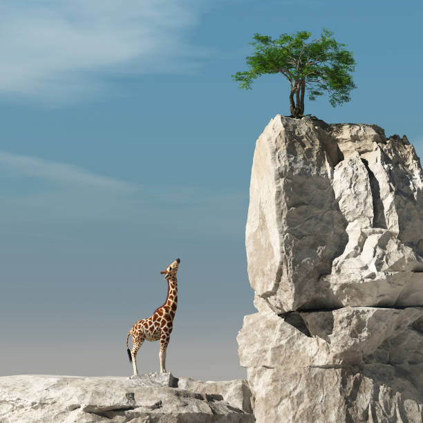 Giraffe looks up to a tree on a rock. The concept of accomplishment. 3d render stock photo