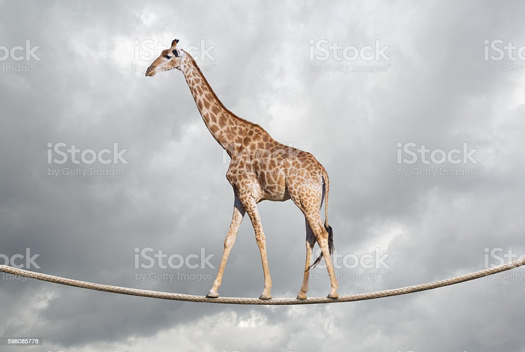 Giraffe on tightrope stock photo