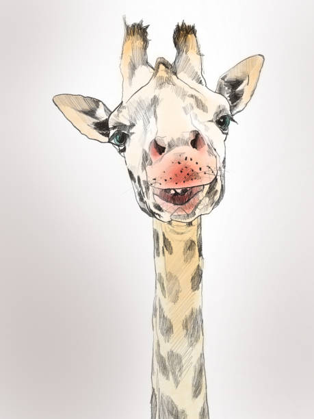 giraffe painting watercolor - pencil drawing stock pictures, royalty-free photos & images