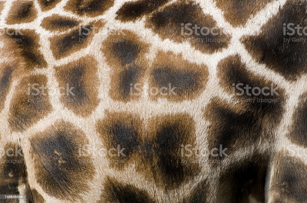 giraffe pattern royalty-free stock photo