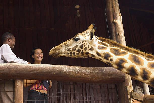 giraffe - vorschulzoothema stock-fotos und bilder