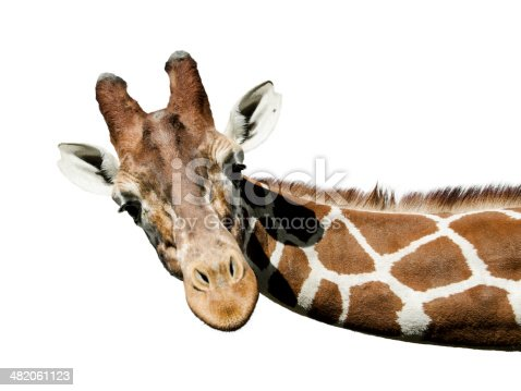 Beautifull Giraffe Portrait, close up