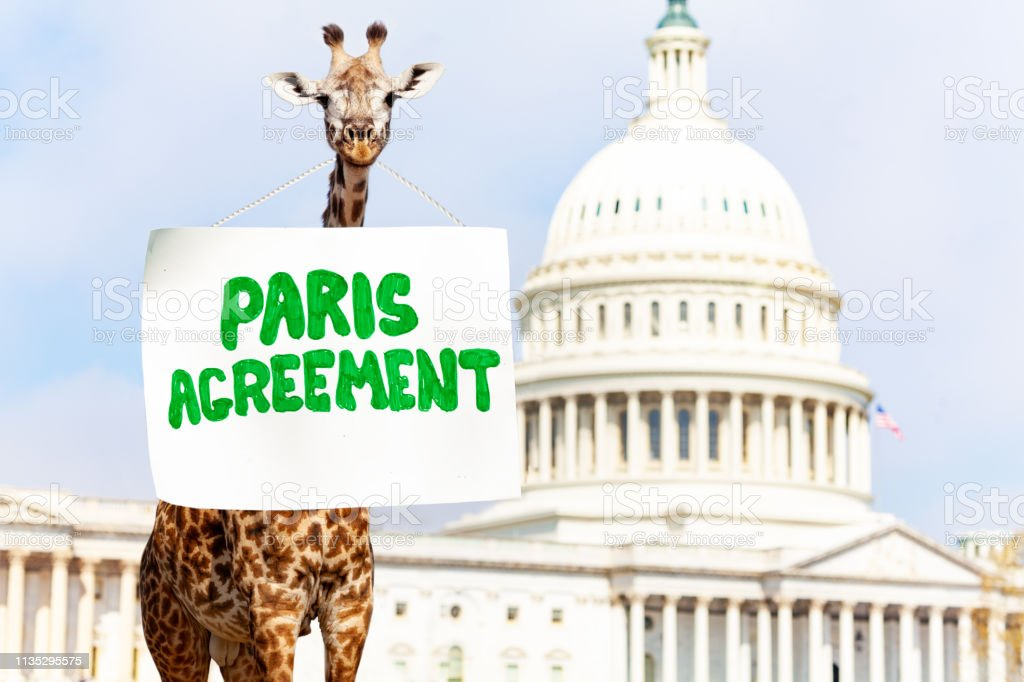 Giraffe Sign Paris Agreement For Climate Change Stock Photo - Download  Image Now - iStock