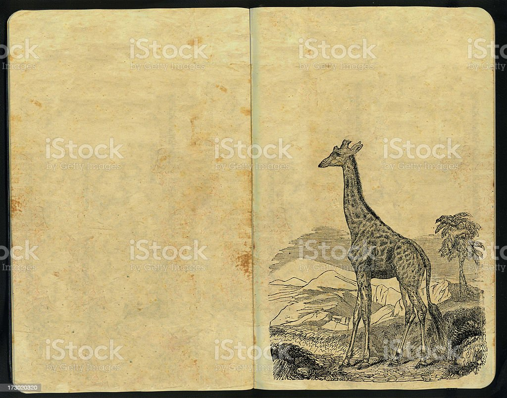 Giraffe Sketch Pad royalty-free stock photo