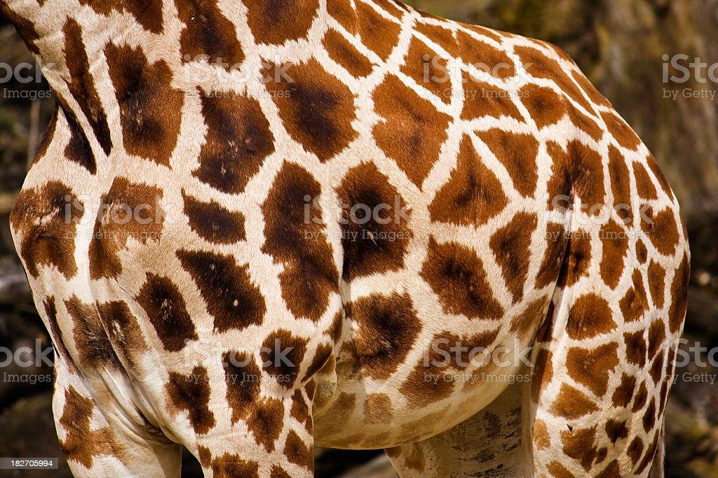 Giraffe Style royalty-free stock photo