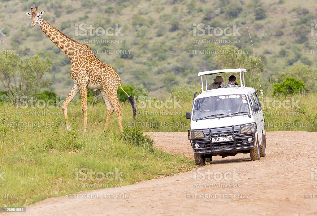 Giraffe with safari car. Foreign people are watching wild life at...