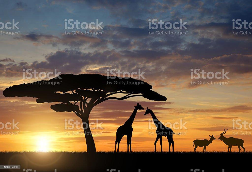 Giraffes with Kudu stock photo