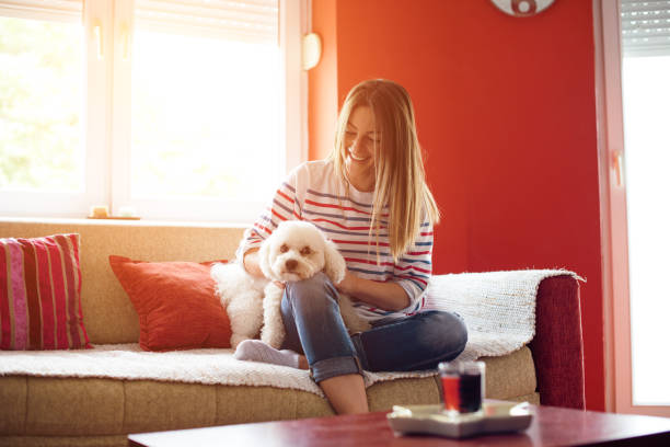 Girl and dog enjoying in living room picture id918011436?b=1&k=6&m=918011436&s=612x612&w=0&h=mp bi35sfgqcaq5n4tvjf3i rwqfkx7 mnlp 0yvvnc=