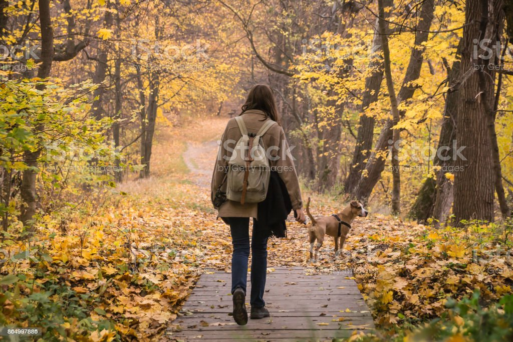 Girl and dog on walk in beautiful autumn nature park stock photo