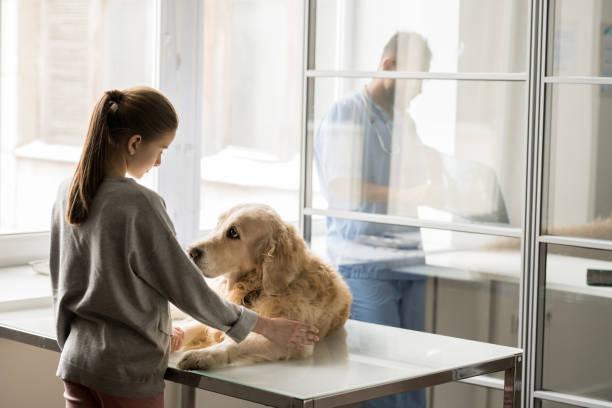 Girl and dog picture id1132760269?b=1&k=6&m=1132760269&s=612x612&w=0&h=mjcjzgsm6tzdvbofyod8c52qzhvfg3embusghatyht4=