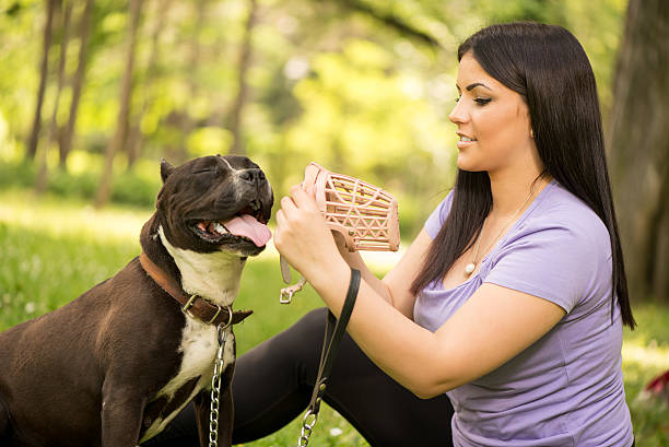 Girl And Dog Beautiful young woman puts muzzle basket to her cute stafford terrier in the park. snout stock pictures, royalty-free photos & images