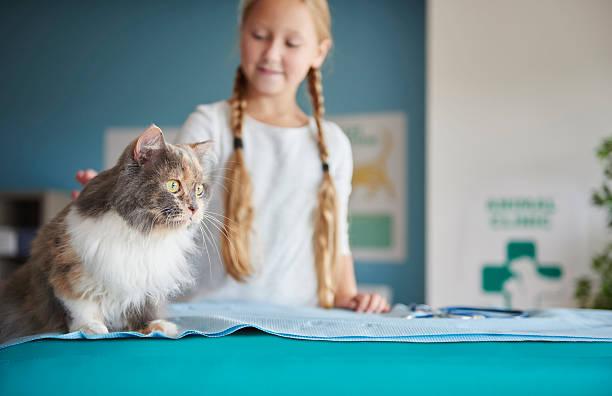 girl and her cat at the vet - katzenschrank stock-fotos und bilder