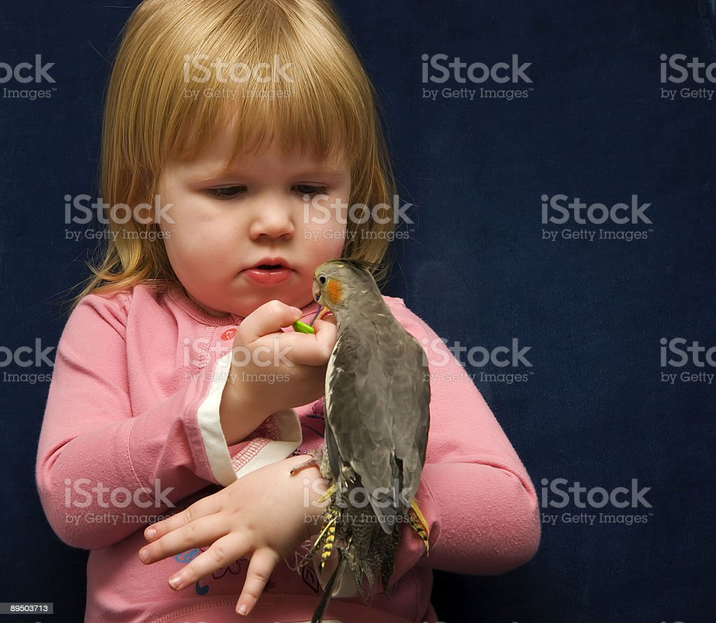 Girl and Her Cockatiel royalty-free stock photo