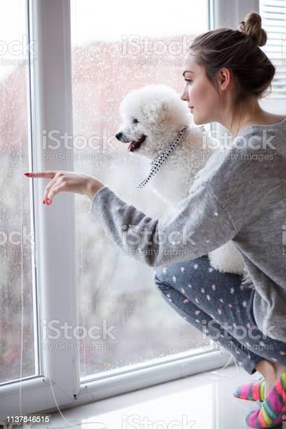Girl and her dog enjoying rainy day looking through window picture id1137846515?b=1&k=6&m=1137846515&s=612x612&h=uojyum7buc3onzohfqe2f7eyyp1gt9qpbpudlajrnpe=
