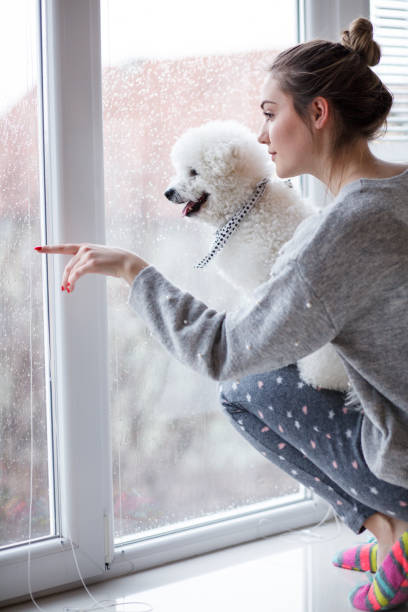 Girl and her dog enjoying rainy day, looking through window Girl and her dog enjoying rainy day, looking through window. person holding dog rain stock pictures, royalty-free photos & images