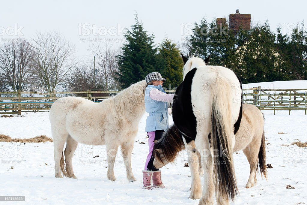 Girl and her horses on a cold snowy day. stock photo