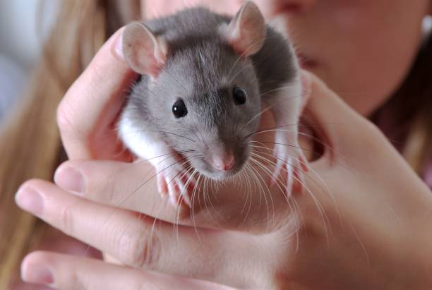 Jeune fille et son rat 2 - Photo