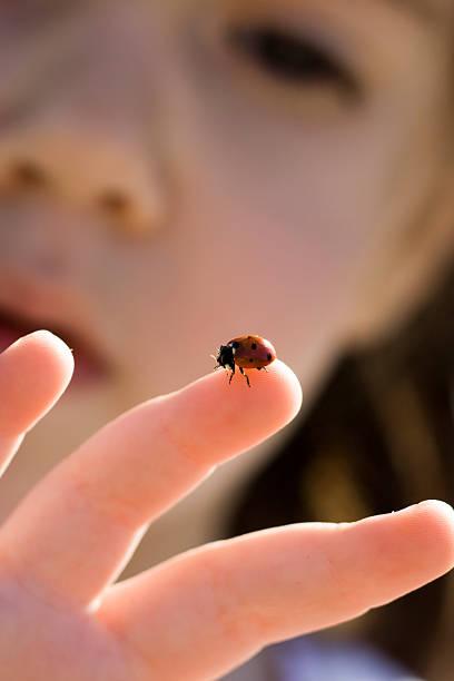 Girl and ladybug stock photo