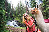 Smiling blond teenage girl with a white llama in the San Juan Mountains on the Highland Mary Lakes trail beside a waterfall, Weminuche Wilderness, Rocky Mountains, Silverton, Colorado, USA