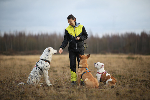 istock A girl and three dogs sitting on the autumn field. 1150513038