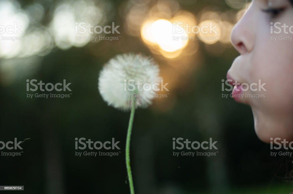 Girl blowing dandelion flower in the field - Royalty-free Adult Stock Photo
