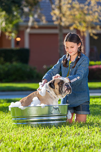 girl child washing her pet dog in a tub - bacinella metallica foto e immagini stock