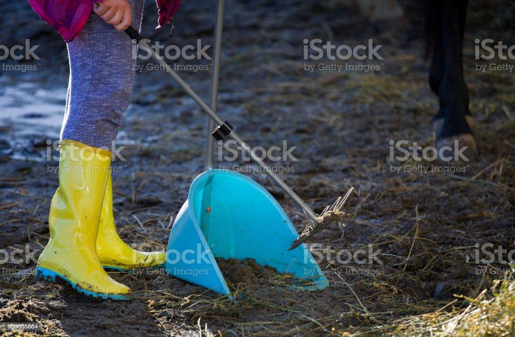 Girl collecting horse feces on farm stock photo