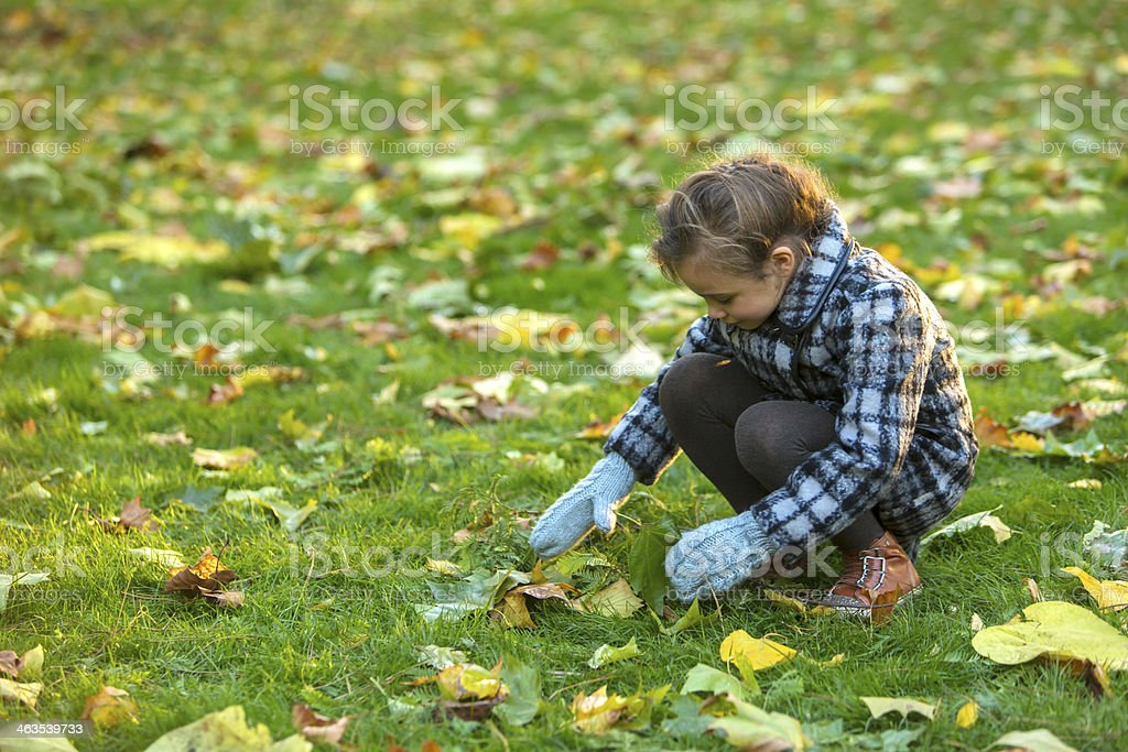 Girl Collecting Leaves stock photo