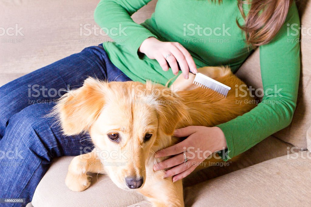 Girl combing her dog stock photo