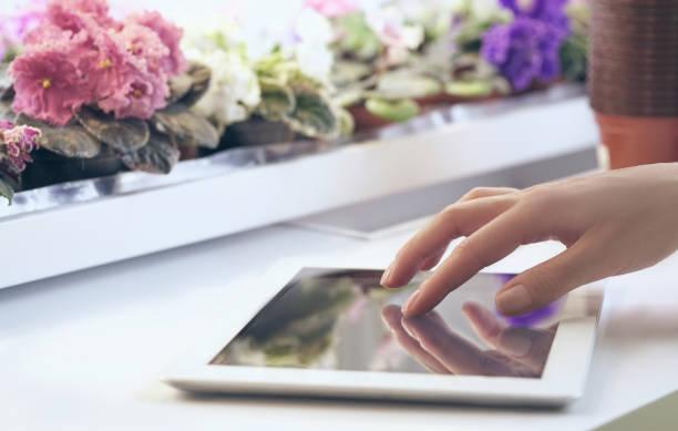 Mädchen trägt Informationen über das Wachstum von Blumen in der Tablette auf dem Hintergrund des Racks mit Veilchen – Foto