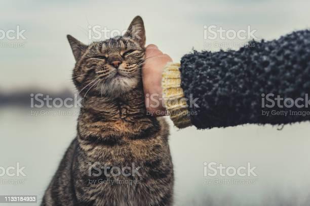 Girl cuddle cat picture id1133184933?b=1&k=6&m=1133184933&s=612x612&h= 3d welkzkjant9kvvv zplfezwok5oynuwjtedz a8=