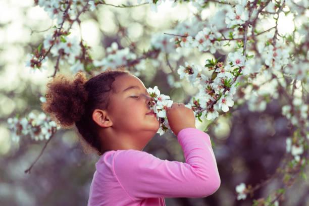 女孩享受綻放的香氣。 - 在開花 個照片及圖片檔