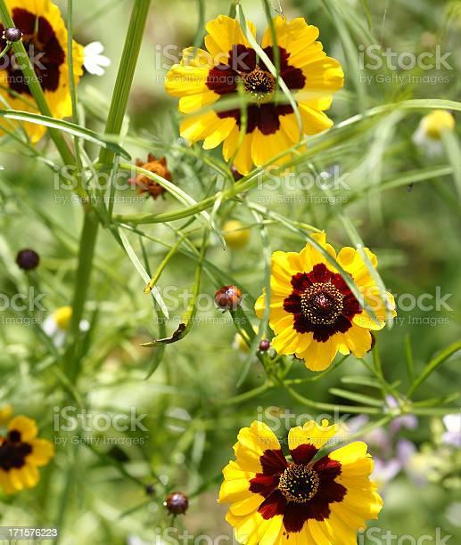 Photo of Girl eye flowers