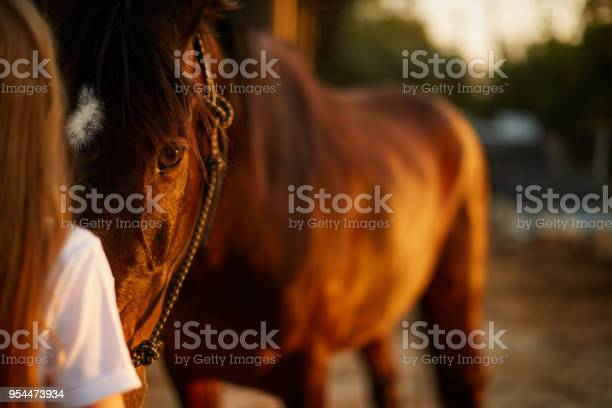 Girl face to face with a horse picture id954473934?b=1&k=6&m=954473934&s=612x612&h=iyvnkcspewi0hezexpa0tjr96mdbb9nvbi hdtiaowe=