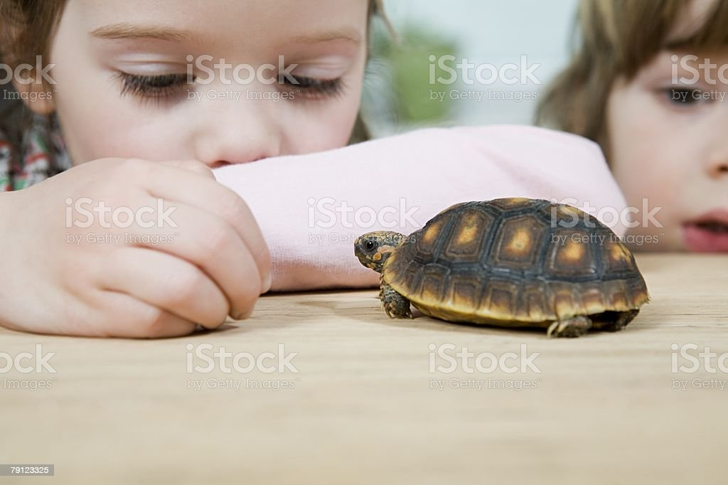 A girl feeding a tortoise royalty-free 스톡 사진