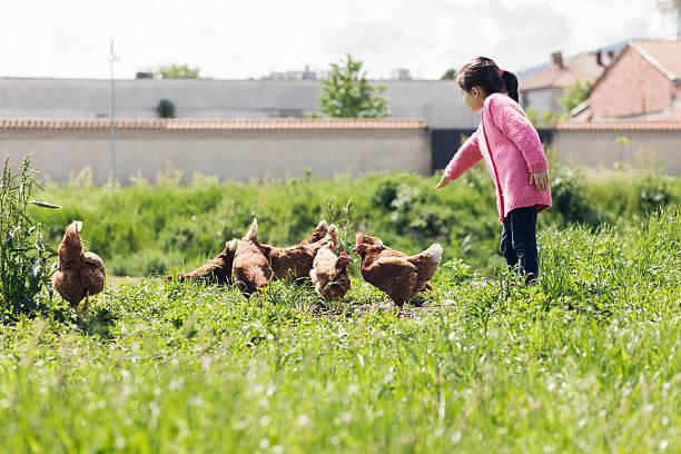 Girl feeding chickens at a farm picture id534621058?b=1&k=6&m=534621058&s=612x612&w=0&h=qdxsciswzkxzhfemg6e xymh6 nmc0x jcxtfmcq1ym=
