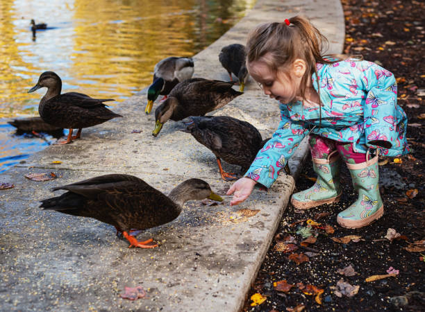 What to feed ducks?