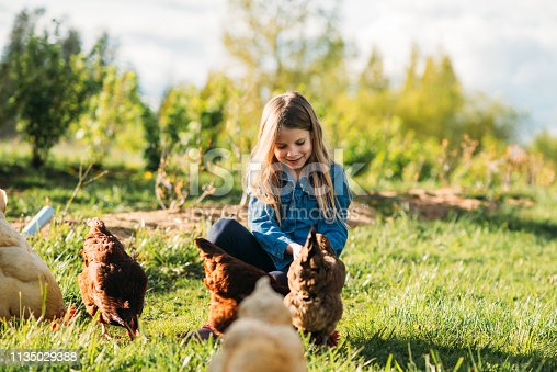 Girl feeding hens at the farm