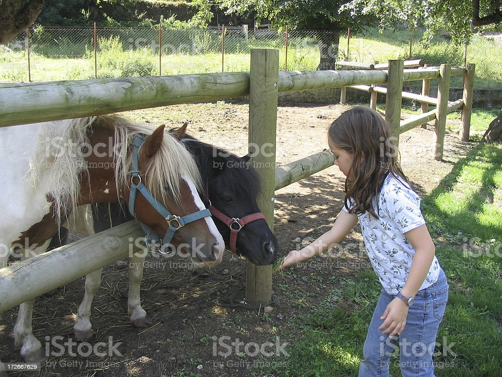 Girl feeding horses stock photo