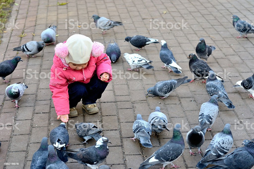 Girl feeding pigeons stock photo