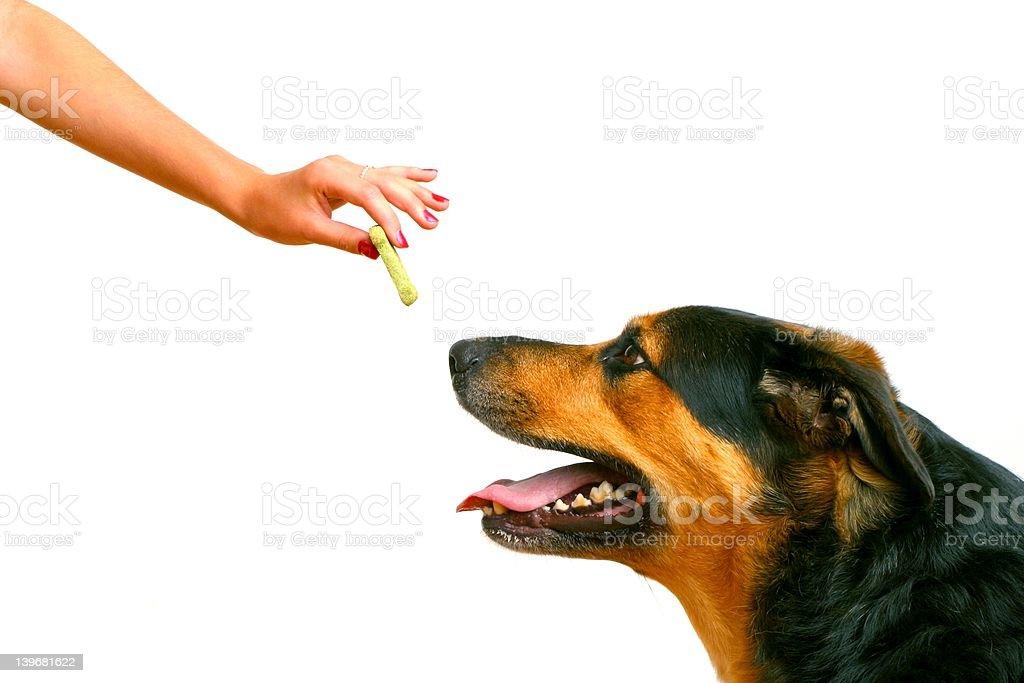 girl feeding the dog a treat royalty-free stock photo