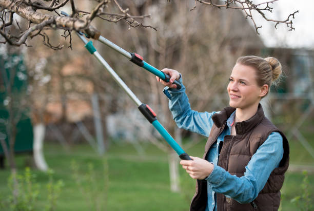 Girl gardener working in the spring garden and trimming tree stock photo