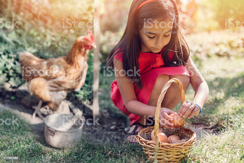 Girl gathering eggs from the coop stock photo