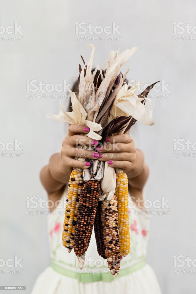 A Girl Gathering Indian Corn Outdoor stock photo