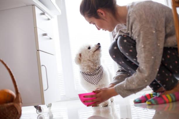 mädchen geben zu hause wasser an hund - füttern stock-fotos und bilder