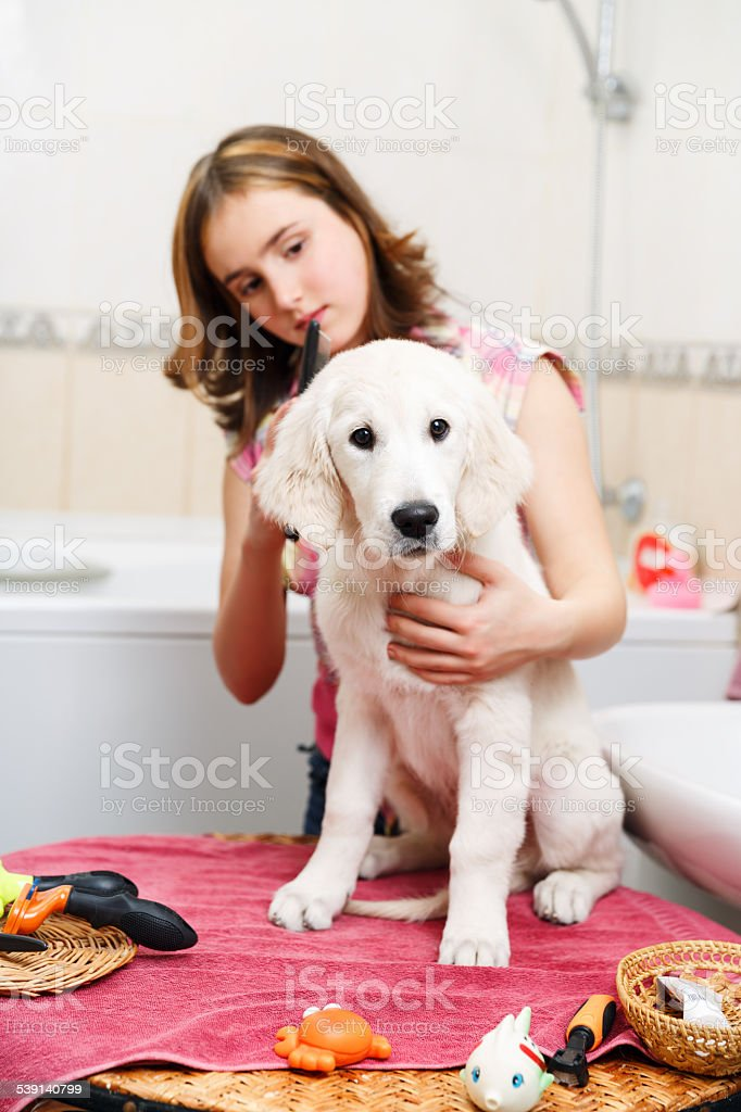 Girl grooming of her dog at home stock photo