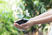 girl hand holding young tree for prepare plant on ground, save world concept.