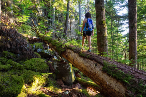 Girl Hiking in a Wild Forest