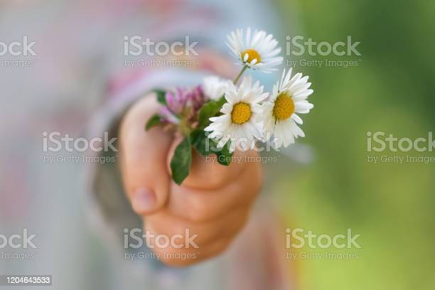 Photo of Girl holding a bouquet of daisies in her hand close-up