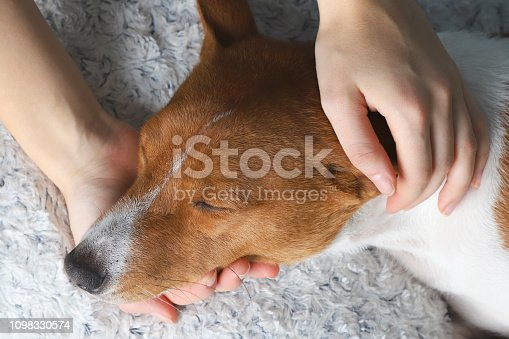 A girl holding a dog's head, close up.